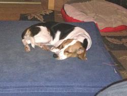 Memory Foam Dog Bed Harley