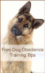 Free Dog Obedience Training Tips
