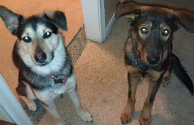 Rylee and Brady GSD Mixes
