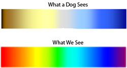 Dog Color Blind