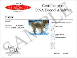 Dog Dna Testing