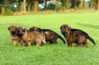 Dog Growth