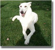 Dog Lost and Found Aida