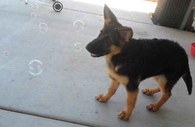 Duke at 4 Months