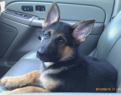 Duke in the Car