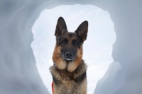 German Shepherd Rescue Wisconsin