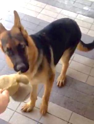 German Shepherd Claw