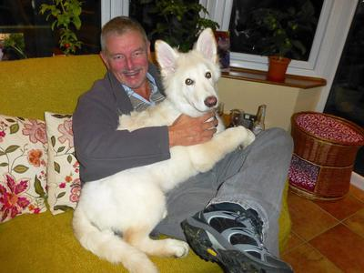 My German Shepherd Max