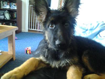 Kilo at 14 weeks old