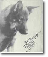 Original Rin Tin Tin