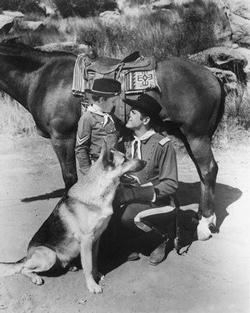 Rin Tin Tin image