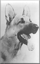 Rin Tin Tin Bio