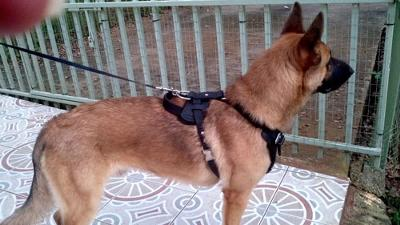 Rockey Protection/Agitation Training Harness