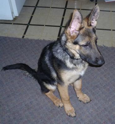 Ruger at 5 months
