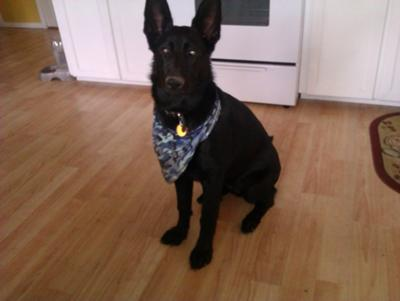 Shade wearing her new bandana