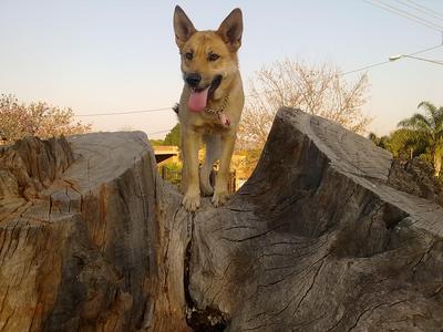 Mia climbing a tree