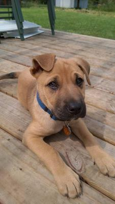 My puppy Thor