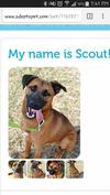 Our Scout