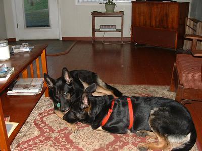 My German Shepherd keepers