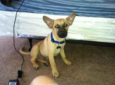 pet dog breeds dog food for small breeds working dog breeds good dog
