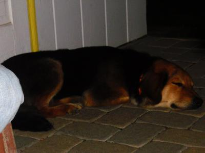 Buddy sleeping when he was younger (1 ish)