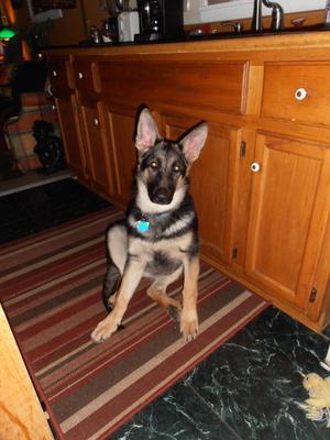 Dakota 6 months