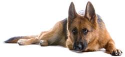 Dog Body Language Pet