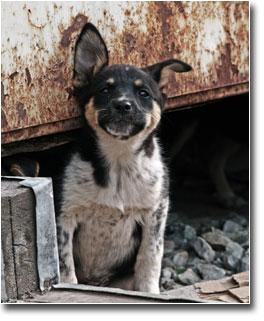 Dog Euthanasia Orphan