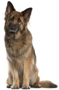 Female Dog Incontinence