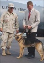 Fluffy the War Dog Reunited