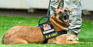 German Shepherd k9
