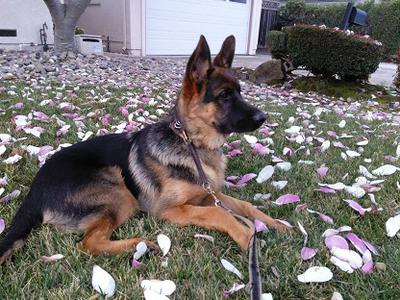 GSD Max - started out small
