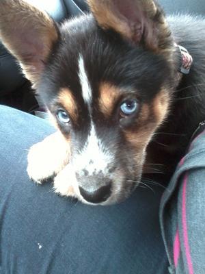 Roxie's beautiful eyes