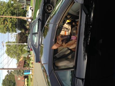 Sandy in Dad's car