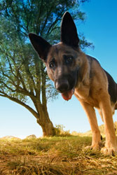 German Shepherd Lore Sitemap